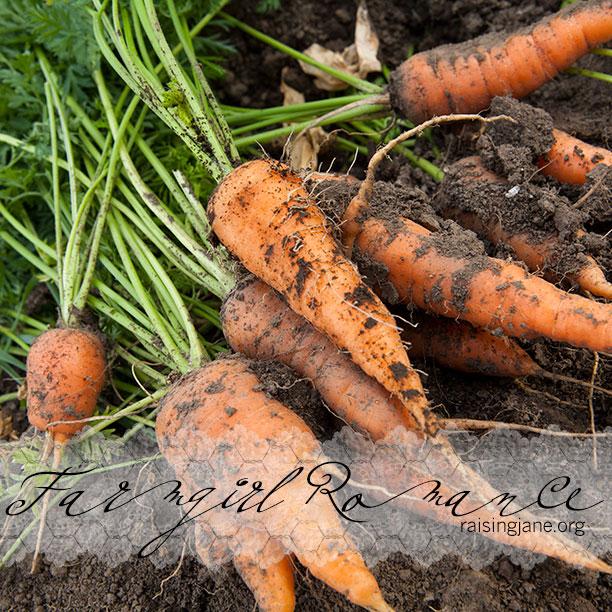 farm-romance_0008