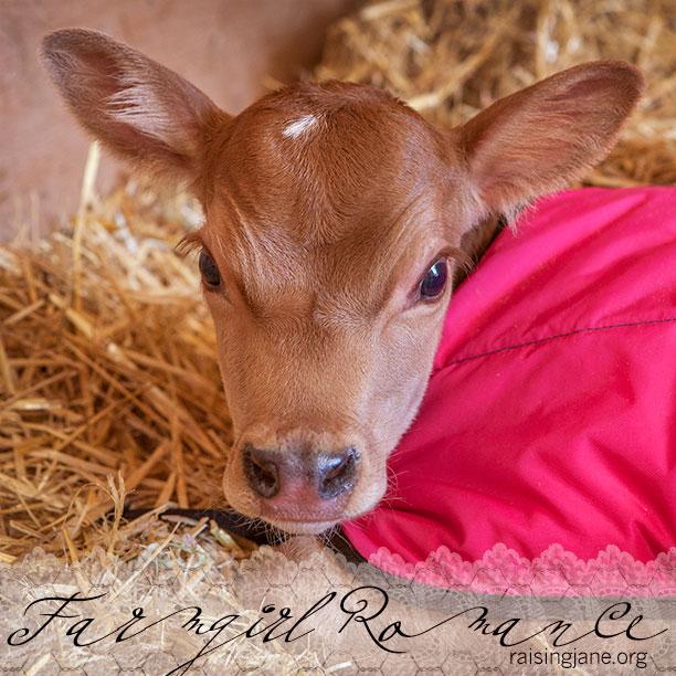 farm-romance_8459