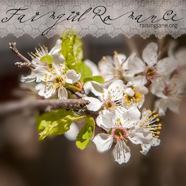 farm-romance_8921