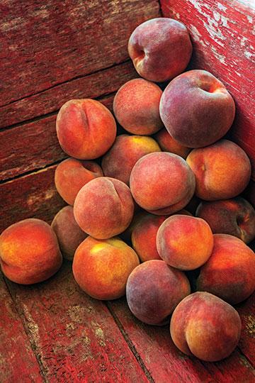 Peaches-high-res_2344