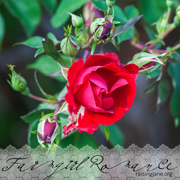 farm-romance_1646