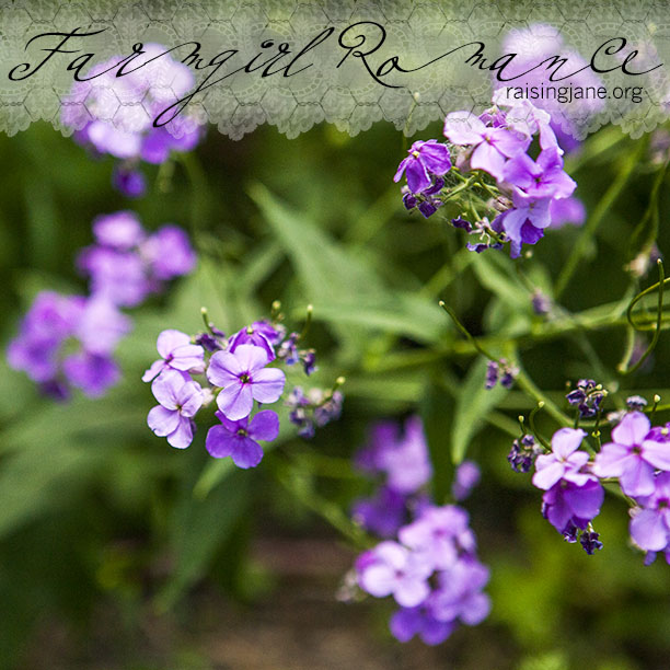 photo-of-the-day-flowers_9971