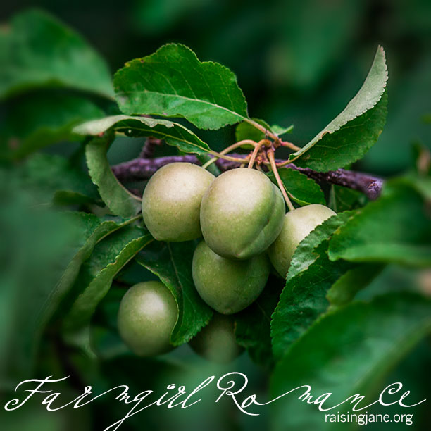 farm-romance-4064