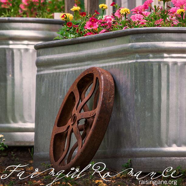 farm-romance-4067