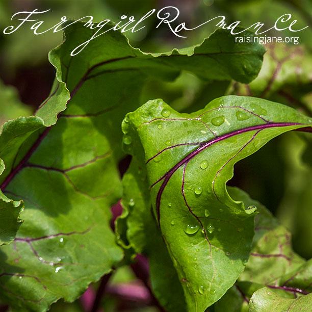 farm-romance_5038
