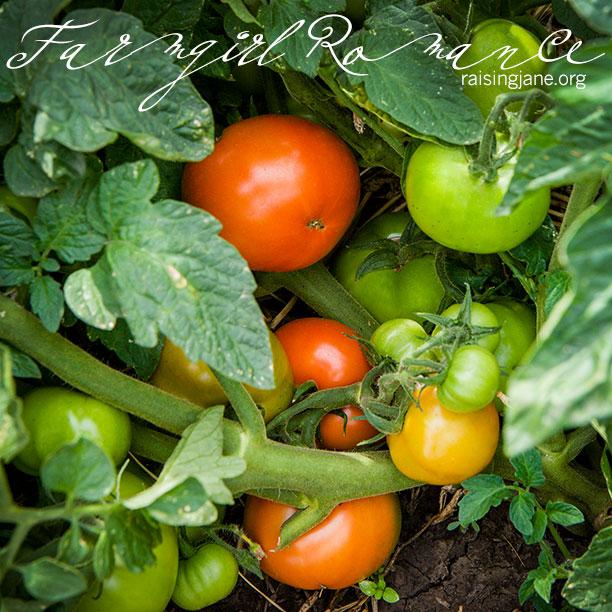 farm-romance-5804