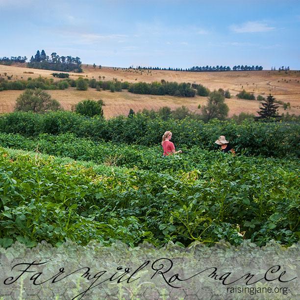 farm-romance-5899