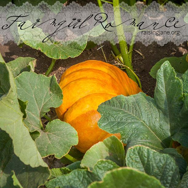 farm-romance-5978