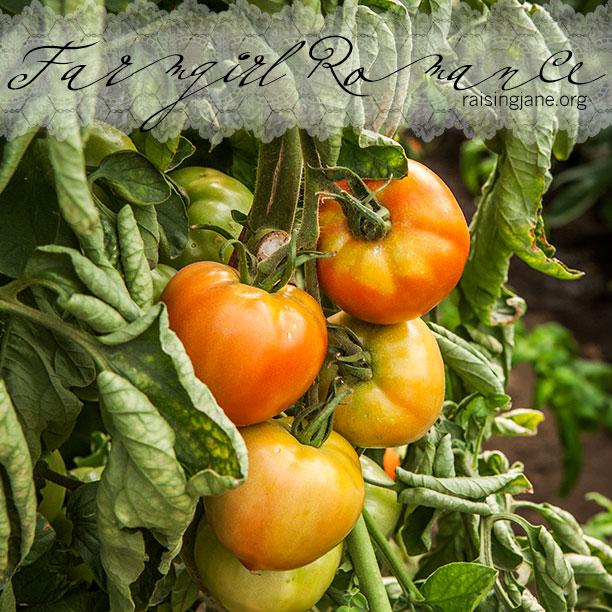 farm-romance-6019