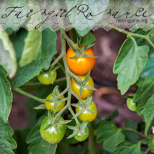 farm-romance-6259