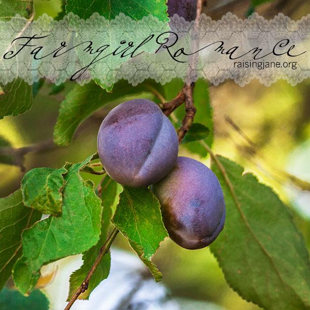 farm-romance-6287