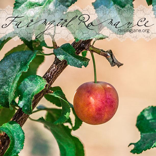 farm-romance-6310