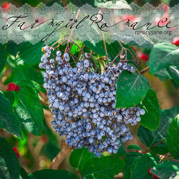 farm-romance-6313