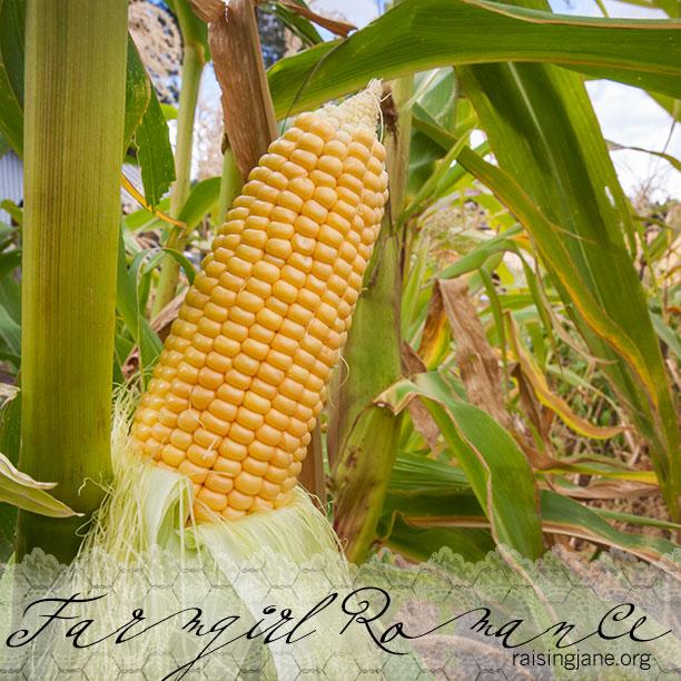 farm-romance_0457