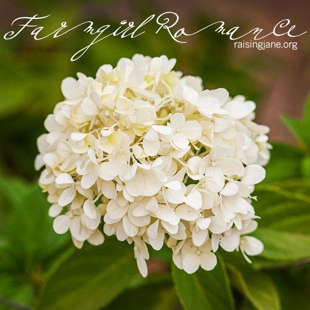 farm-romance_5364