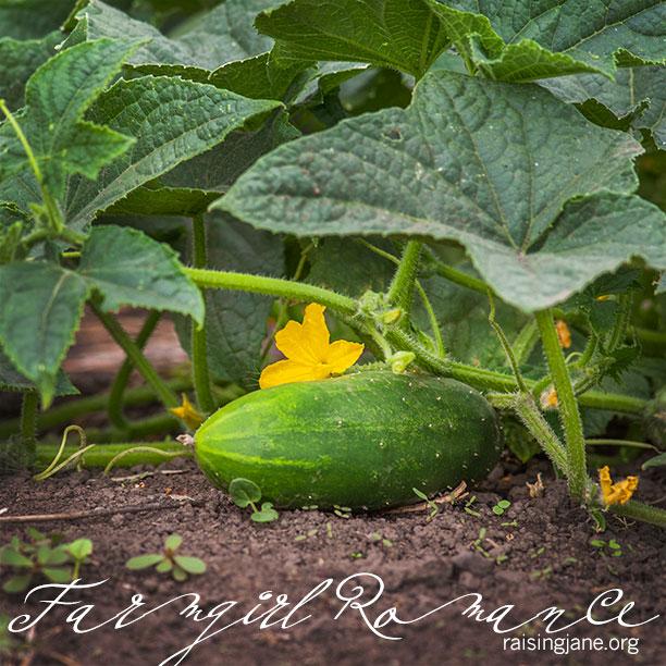 farm-romance_5424