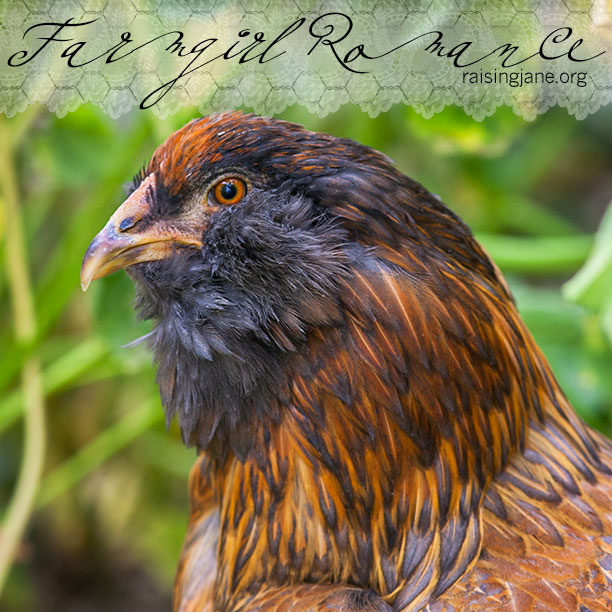 farm-romance_5457