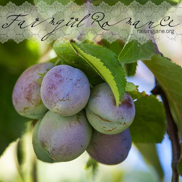 farm-romance_5689