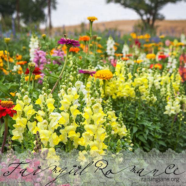 farm-romance_6230