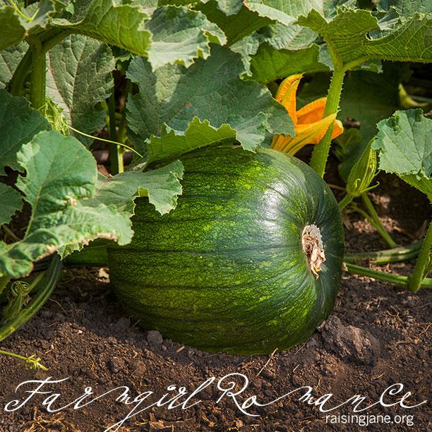 farm-romance-5968