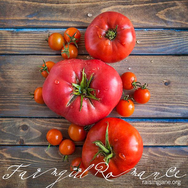 farm-romance-9765