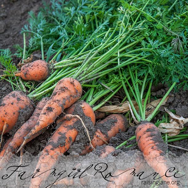 farm-romance_0149