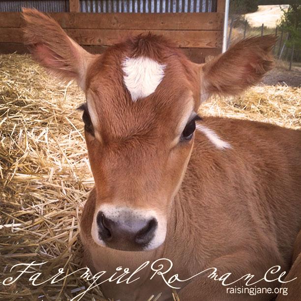 farm-romance_0956
