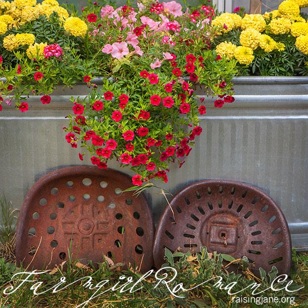 farm-romance_8934