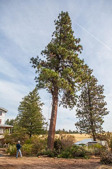 tree_9141