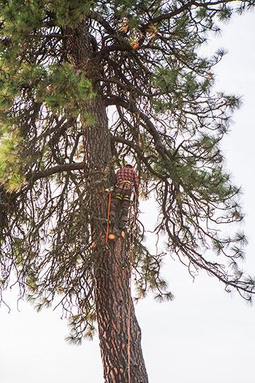 tree_9162