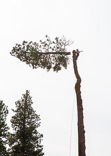 tree_9226
