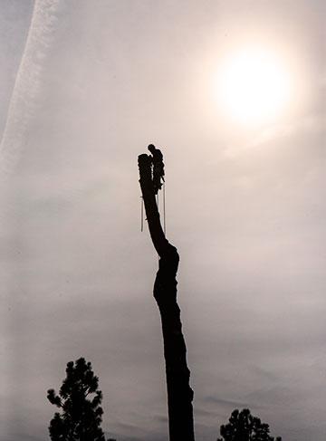 tree_9241
