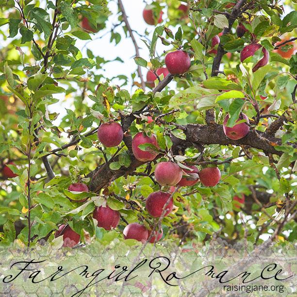 farm-romance_0393
