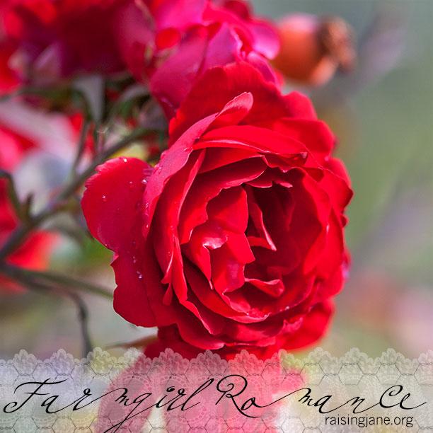 farm-romance_1569