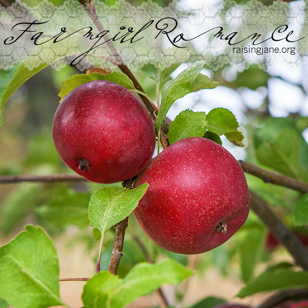 farm-romance_7453