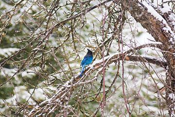 bird_MG_6845