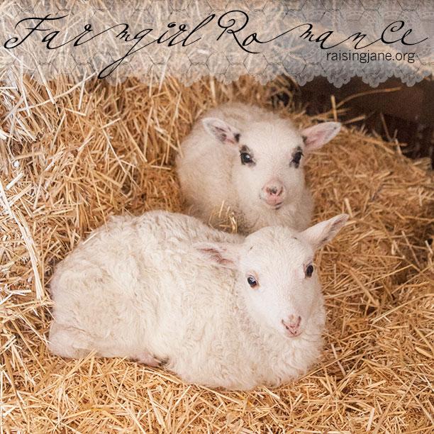farm-romance_6970