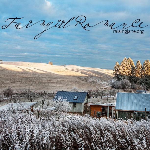 farm-romance-4796