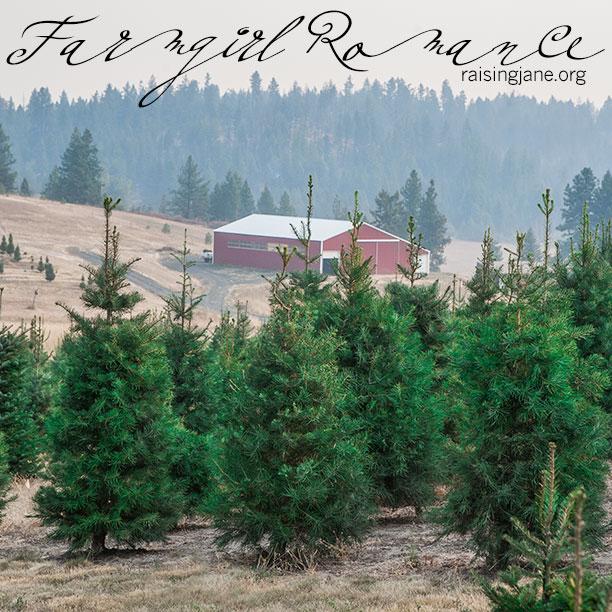 farm-romance-6906