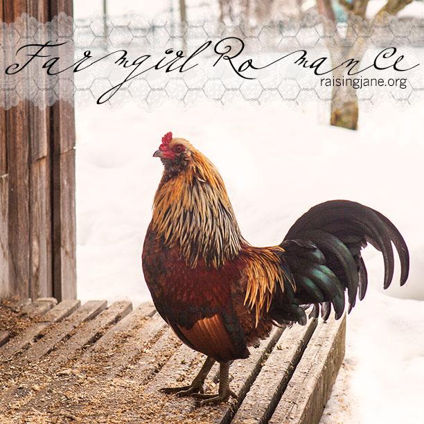 farm-romance_6019