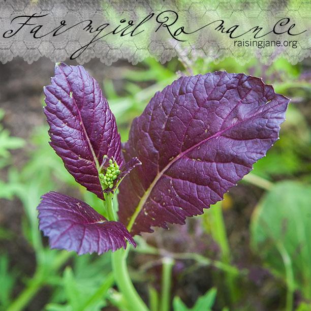 farm-romance_8298