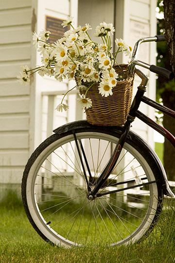 bike-flowersDSC_7404