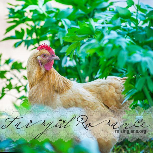farm-romance_0326