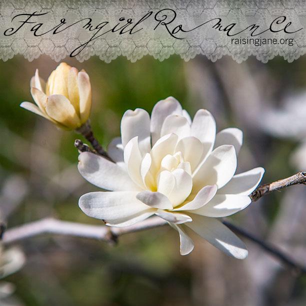 farm-romance_0417