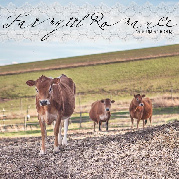 farm-romance_6379