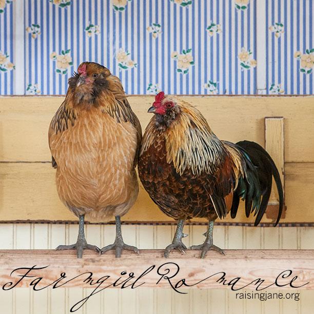 farm-romance_9443