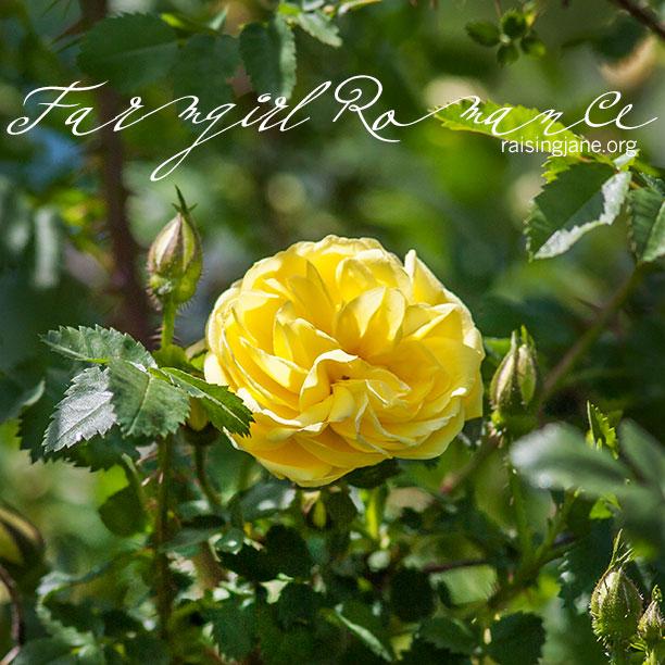 farm-romance_1338