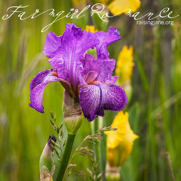 farm-romance_1901