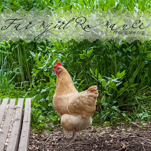 farm-romance_6686