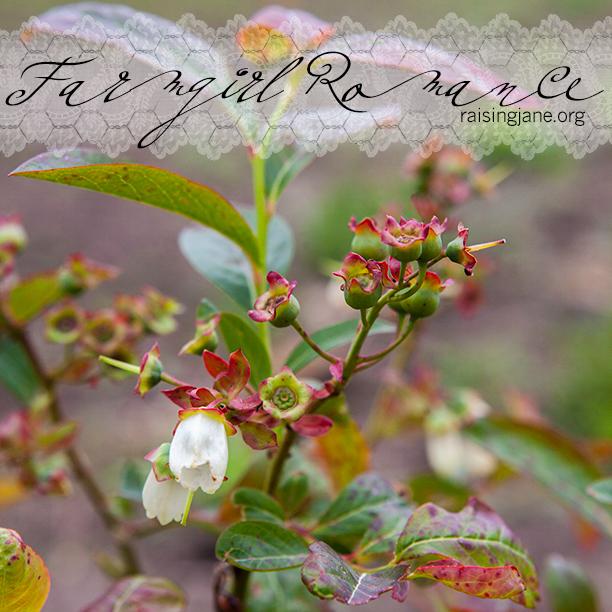 farm-romance_6718